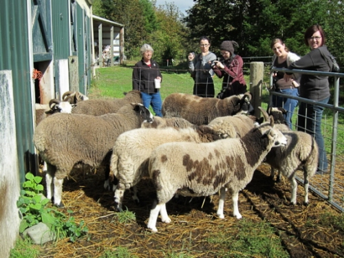 Jan's flock on the Fiber farm Tour